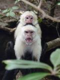 20070530_monkey